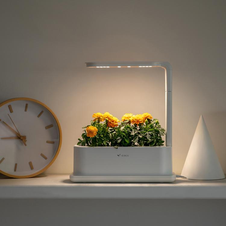 Desktop Grow Box
