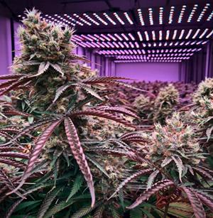 TCL Zigbee Plant Grow Light