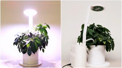 Smart Indoor Garden Lite